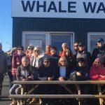 2018 Islanda balene